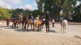 סוסים 1